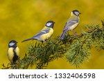 three songbirds. garden birds... | Shutterstock . vector #1332406598