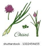 Garlic Chives Hand Drawn...