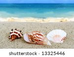 Three Colorful Seashells On A...