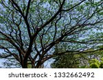 the branches of tree stand... | Shutterstock . vector #1332662492
