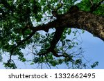the branches of tree stand... | Shutterstock . vector #1332662495