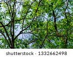 the branches of tree stand... | Shutterstock . vector #1332662498