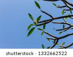 the branches of tree stand... | Shutterstock . vector #1332662522