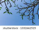 the branches of tree stand... | Shutterstock . vector #1332662525