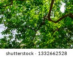the branches of tree stand... | Shutterstock . vector #1332662528