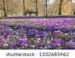 Blooming Crocuses In Oosterpar...