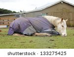 A Tired Horse Wearing A...