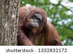 beautiful portrait of ape | Shutterstock . vector #1332832172