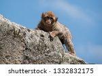 beautiful portrait of ape | Shutterstock . vector #1332832175
