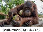 beautiful portrait of ape | Shutterstock . vector #1332832178