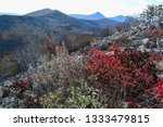 beauty of nature in the... | Shutterstock . vector #1333479815