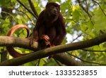 portrait of an ape  | Shutterstock . vector #1333523855