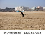 dog jumping and catching yellow ... | Shutterstock . vector #1333537385