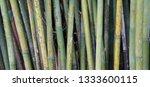 Natural Bamboo Stalks Screen    ...