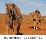 camel in the australian... | Shutterstock . vector #1333807412
