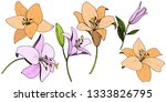 vector pink and orange lily... | Shutterstock .eps vector #1333826795