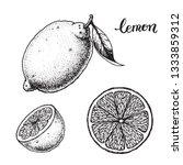 lemon hand drawn sketch  vector ...   Shutterstock .eps vector #1333859312