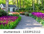 tulip bloom in keukenhof flower ... | Shutterstock . vector #1333912112
