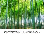 Spring Bamboo Forest