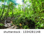 stone steps and lush vegetation ... | Shutterstock . vector #1334281148