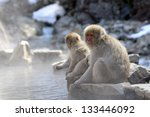 Japanese Macaque  Snow Monkey ...