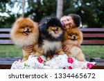 Stock photo beautiful little girl sitting on bench in park with her adorable pomeranian dogs 1334465672