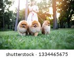 Stock photo beautiful little girl enjoying in park with her adorable pomeranian dogs 1334465675