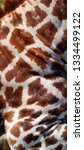 skin of a giraffe  giraffa... | Shutterstock . vector #1334499122