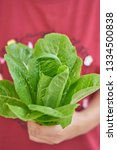close up fresh salad leaves in... | Shutterstock . vector #1334500838