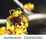 insects taken first food from... | Shutterstock . vector #1334523242