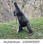 ape is posing | Shutterstock . vector #1334545055