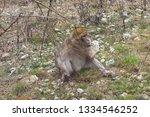 ape is sitting | Shutterstock . vector #1334546252