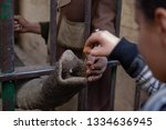 animals in the zoo in giza ...   Shutterstock . vector #1334636945