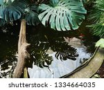 water wavers in a small pond... | Shutterstock . vector #1334664035