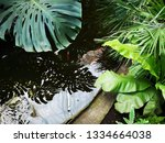 water wavers in a small pond... | Shutterstock . vector #1334664038