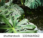 water wavers in a small pond... | Shutterstock . vector #1334664062