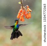 hummingbird in costa rica  | Shutterstock . vector #1334772365
