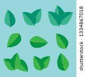 leaf herbal spearmint plant.... | Shutterstock . vector #1334867018