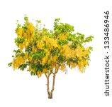 golden shower tree  cassia... | Shutterstock . vector #133486946