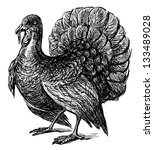 turkey | Shutterstock . vector #133489028