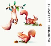 squirrel with branches and... | Shutterstock .eps vector #1335190445