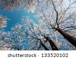 snow and frost covered locust... | Shutterstock . vector #133520102