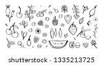 wild berries and fruits vector... | Shutterstock .eps vector #1335213725