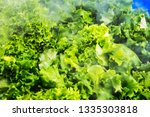 fresh green salads in the... | Shutterstock . vector #1335303818