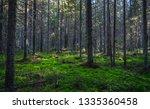 forest wilderness trees... | Shutterstock . vector #1335360458