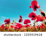 red poppies flowering in summer ... | Shutterstock . vector #1335419618