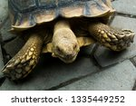 Stock photo the african spurred tortoise also called the sulcata tortoise is a species of tortoise this is one 1335449252