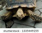 Stock photo the african spurred tortoise also called the sulcata tortoise is a species of tortoise this is one 1335449255
