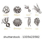 set vegetables radishes  beets  ... | Shutterstock .eps vector #1335623582