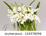 a lot of snowdrops in glass... | Shutterstock . vector #133578098